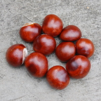 pile of 10 conkers