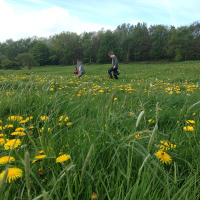 children in a field of dandelions