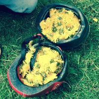 cycle helmets fun of dandelions