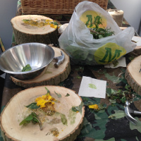 foraged dandelions ready for use