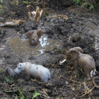 toy animals in a mud puddle