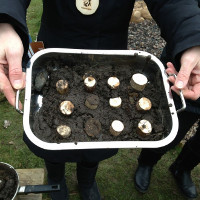 a tray of mud pies