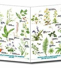 Guide to Ancient Woodland