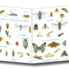 Field Guide - Insects of the British Isles