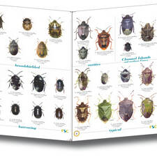 Field Guide - Shieldbugs of the British Isles