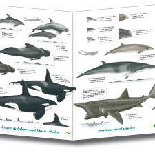 Field Guide - Cetaceans and Seals