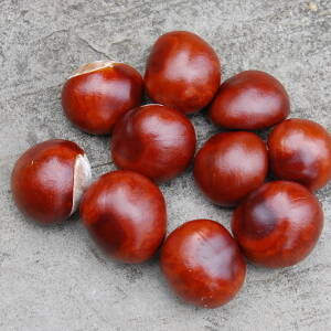 INSPIRATIONS - Conkers