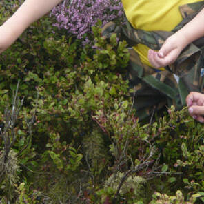 Foraging for wellbeing - a bilberry narrative
