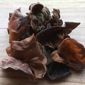 Forage for wood ear fungus