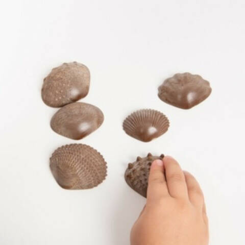 Eco Friendly Tactile Shells - Pack of 36