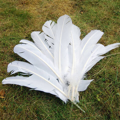 Feathers - Pack of 12