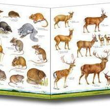 Field Guide - Land Mammals of Britain