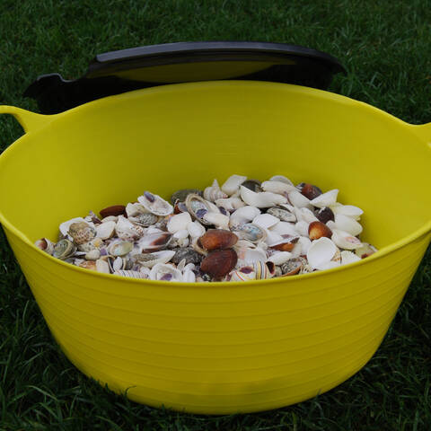 Shells - 3kg in a tub