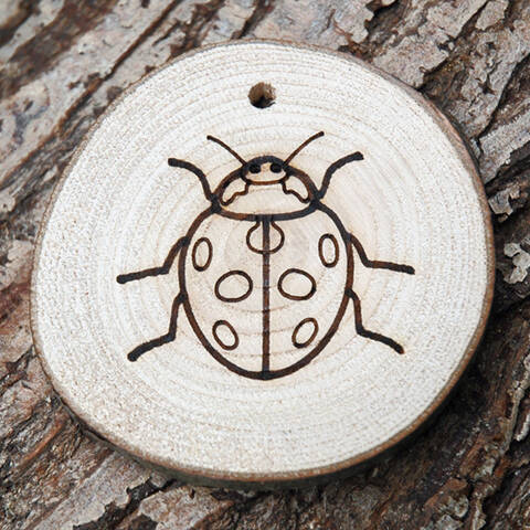 Trail Disc - Minibeasts - Ladybird