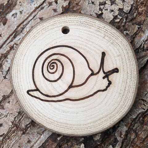 Trail Disc - Minibeasts - Snail